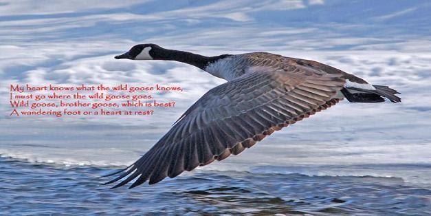Wild Goose final
